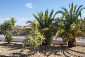 Natxomantenimiento | Turre | Spain Property Management | Jardinería residencia privada | Gardening Private residence